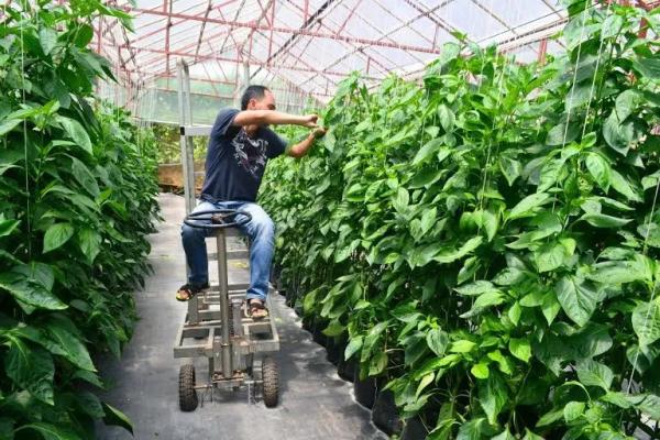 Các từ vựng Tiếng Anh chuyên ngành Nông nghiệp phổ biến nhất