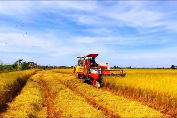 Nông nghiệp bao gồm những chuyên ngành nào?